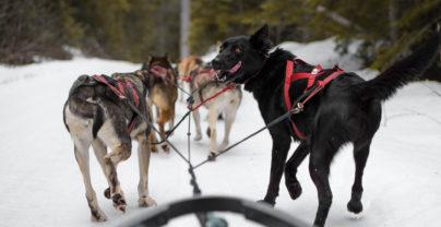 5 unvergessliche Abenteuer im Jasper National Park