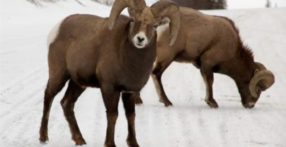 10 Tage Winterspaß in Jasper mit Edmonton